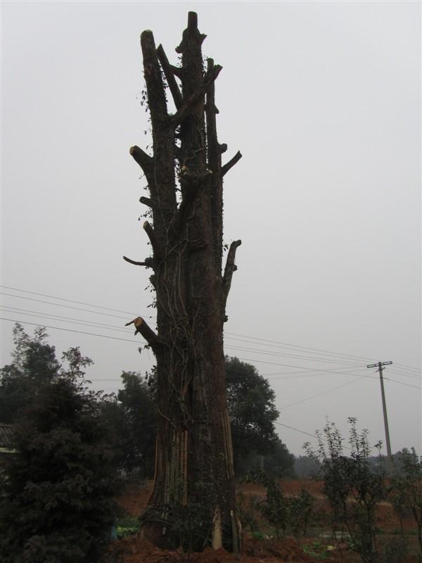 苗木 供应信息 597