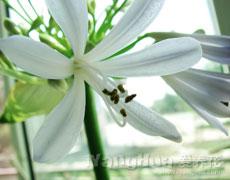 点击查看梅花的养殖方法