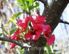 花的种类介绍 花卉品种大全 鲜花图片 花卉图片