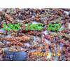 各種紫紅白玉蘭山玉蘭辛夷種子按質論價