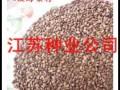 供應八棱海棠種子八棱海棠種子價格