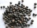 木棉花种子