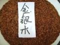 金银木种子每斤50元