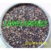 優質牧草種籽蘇丹草黑麥草多花木蘭紫花苜蓿墨西哥玉米三葉草菊苣