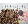 大叶香樟种子朴树种子国槐栾树种籽保质保量全国包邮