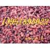 优质紫叶小檗紫叶李种子价格新采红叶小檗种籽红叶石楠种子行情