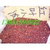 红叶小檗种子紫叶小檗种子比红叶小檗小苗紫叶小檗小苗价格更实惠