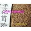 牧草之王紫花苜蓿三叶草沙打旺多花木兰种子价格