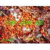 广玉兰紫玉兰白玉兰等玉兰种子的采集储藏和播种方法简介