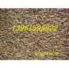 冬牧70黑麦草无芒雀麦荞麦燕麦大麦雁麦玉米草种子全国能邮寄