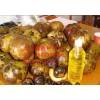 大量批发红花油茶种子、红花油茶种子价格