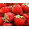草莓苗 泰安草莓苗 山东草莓苗 草莓苗价格
