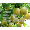 河南省哪里有卖日本甜柿树苗、阳丰柿子树苗、大秋硬柿子树批发、