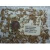 特高黑麦草种子最新价格四倍体黑麦草种子报价黑牧草种子全国包邮