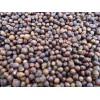 红豆杉种子、种子、刺柏松种子、纯东北红豆杉种子