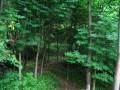 湖北利川珙桐树价格