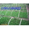 北京桧柏铺地柏蜀桧塔松等松柏的繁殖方法洒金柏侧柏是籽播苗