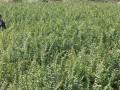 湖北紫薇树苗价格