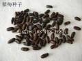 優質臘梅種子
