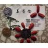 邮寄三角枫五角枫鸡爪槭红枫种子紫玉兰白玉兰广玉兰种籽最新报价