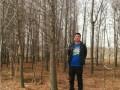 落羽杉,水杉 杨树
