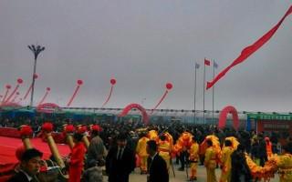 中国597苗木网_黄杨盆景欣赏造型艺术行业资讯597苗木网