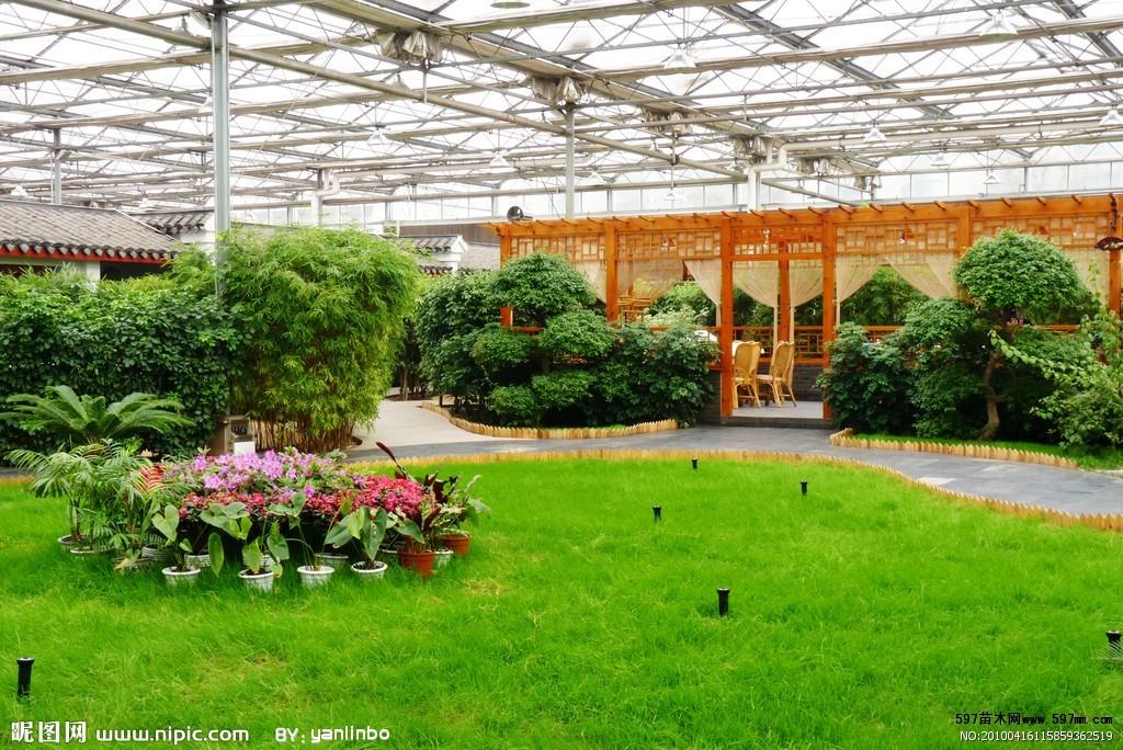 生态循环农业园打造千亩苗木基地