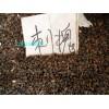 哪里有洋槐黃花槐國槐紫穗槐種子紫穗槐刺槐的播種方法