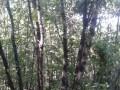 云杉蒙古栎九角枫