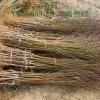 永莲蜜桃桃树苗产量 映霜红桃树苗病虫害防治