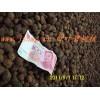 臘梅榆葉梅紫葉碧桃種子價格紅葉桃蠟梅種子多少錢一斤