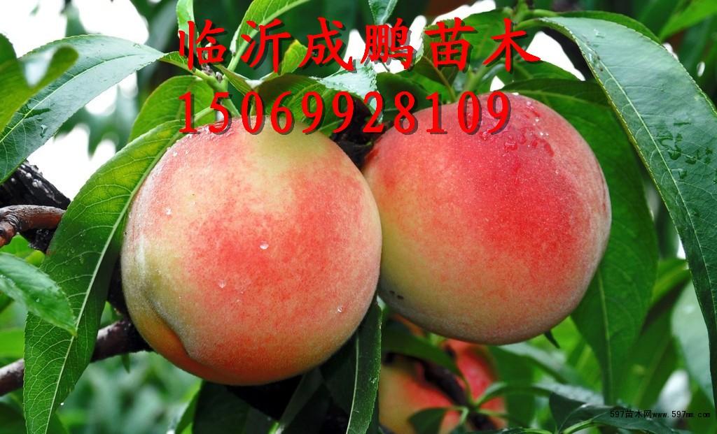 中国597苗木网_艺术性较高的盆景欣赏597苗木网盆景频道造