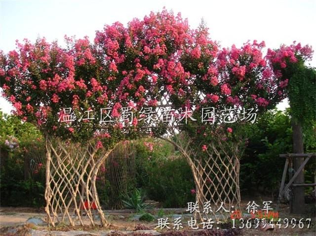 中国597苗木网_