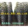 供应根栽大叶女贞苗、周至县苗木基地、1.7米以上女贞苗