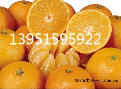 橘子做小动物造型