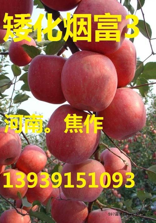 品种好|亩产多少斤|苹果树价格|河北|四川|云南|陕西|禹州|林州|汤阴