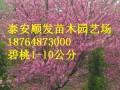 皂角树,黄栌树