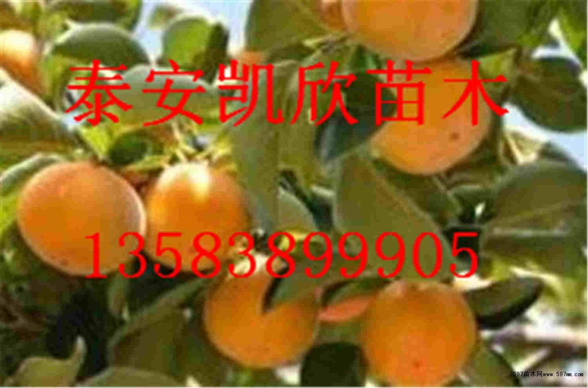 大鱼海棠谱子葫芦丝展示