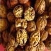 山东薄皮核桃树苗价格 供应品种薄皮核桃树苗多少钱一棵