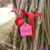 山东吉塞拉樱桃树苗价格 哪里有卖吉塞拉樱桃树苗价格