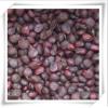 林木种子 紫玉兰红玉兰黄玉兰白玉兰种子批发