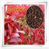 特价批发林木种子 发芽率高 红叶石楠种子