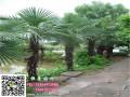 恒景园林棕榈鸿运国际官网