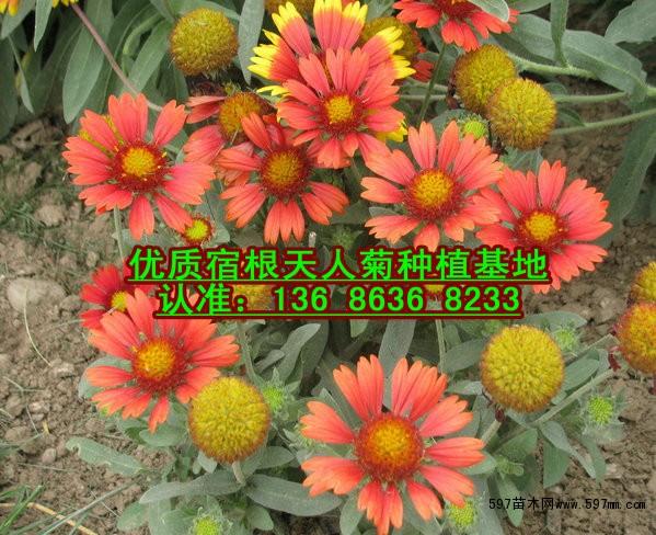 位于山东半岛中部,江北花卉第一镇—&mdash