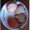 哪里供应出售白草莓苗|湖南哪里有卖白草莓苗的供应商家