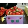 草莓苗新品种、甜宝草莓苗