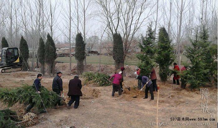 苗木栽植的概念