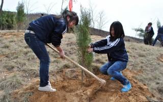 春夏秋冬四季苗木种植的特点