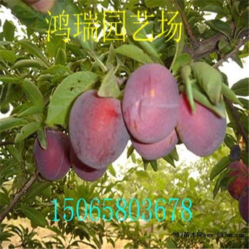 李子果树病虫害图谱书