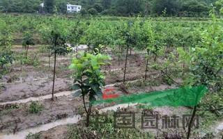 湖北连日暴雨致苗圃被毁 1000余亩地抢救困难